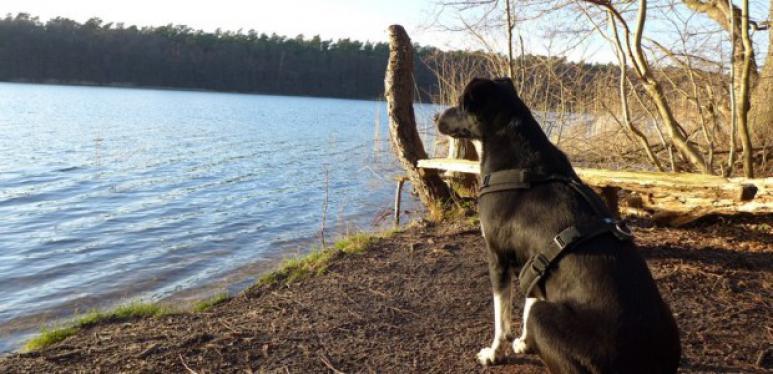 Ausflug Mit Hund Hessen